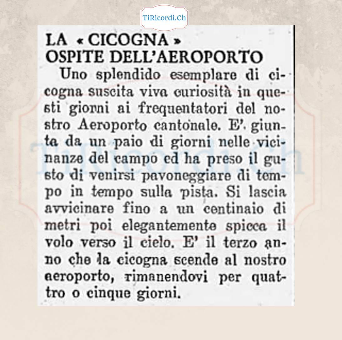 60 anni fa una cicogna all'aeroporto di Magadino.